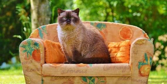 Как почистить тканевую обивку дивана